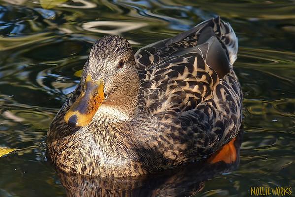 DuckFriend 2