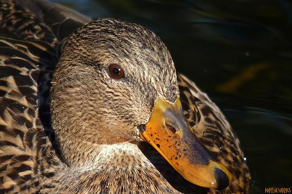 DuckFriends 3