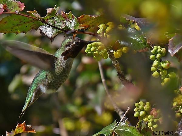 Beaks & Feathers