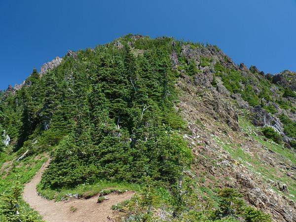Mt Ellinor Views